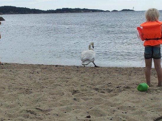Roligheden Ferieleiligheter: en vellykket dag på stranden.