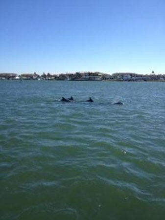 Dolphin Watch Boat Tours: Dolphins at play