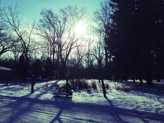 Goldberry Woods Bed & Breakfast Cottages : Part of the property on a winter day