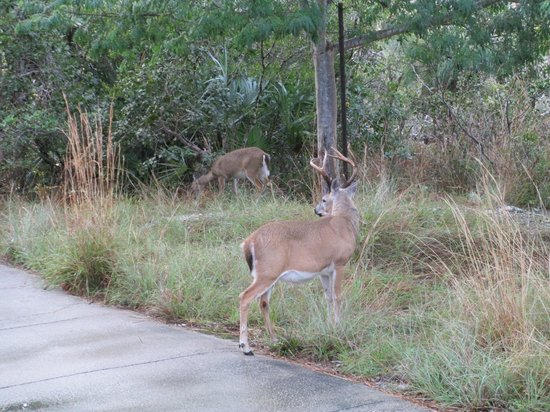Blue Hole: The protected Key Deer