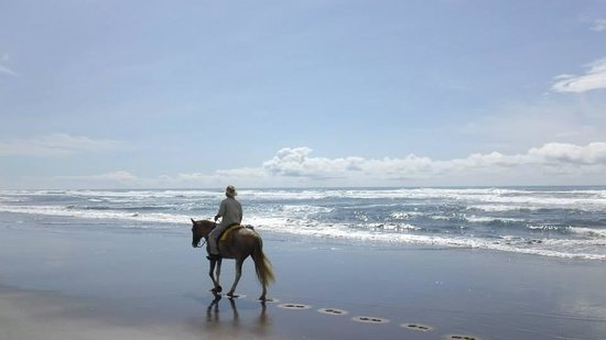 Discovery Horseback Tours: Beach Ride , Tequila and I