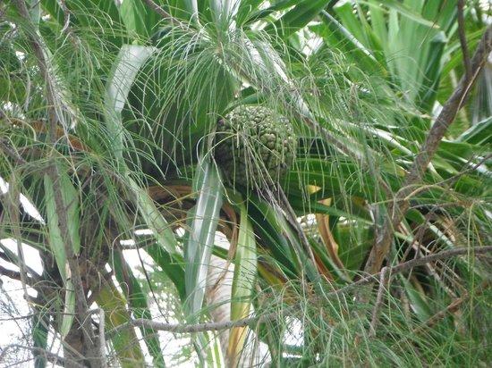 Pacific Resort Rarotonga: beautiful gardens and grounds