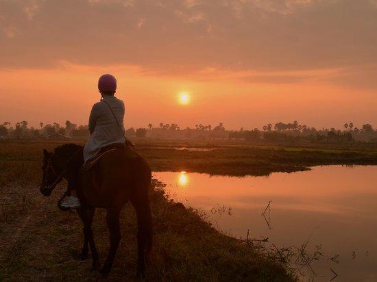 The Happy Ranch Horse Farm : Sunrise over a padi field on horseback.