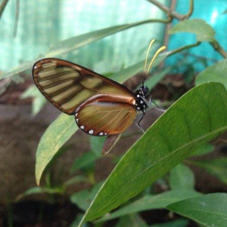 Monteverde Butterfly Garden (Jardin de Mariposas): One of the many species of butterfly you'll see!