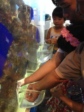 Underwater World and Dolphin Lagoon: Fish feeding