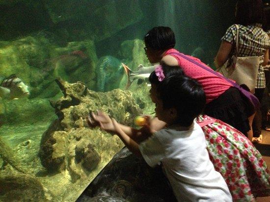 Underwater World and Dolphin Lagoon: Enjoying