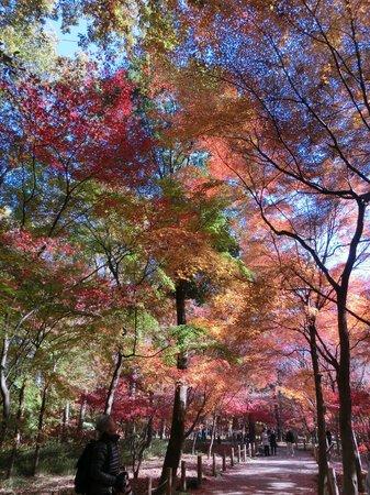 Heirin-ji Temple: 赤青黄色