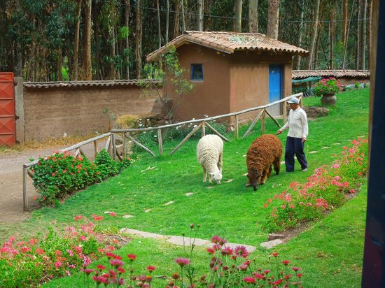 Melissa Wasi: Llamas do hotel