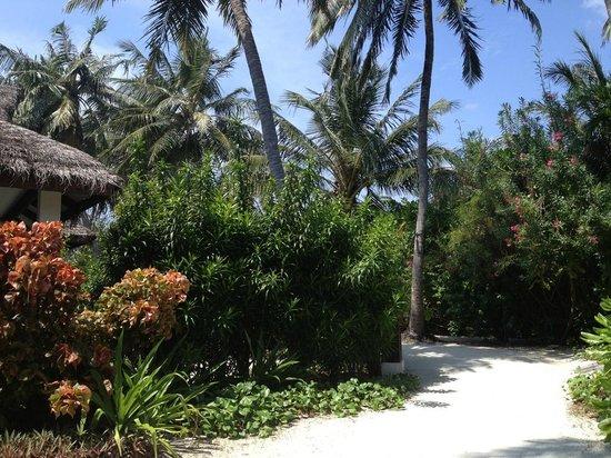 Velassaru Maldives: Gorgeous rustic bungalow, luxury interiors