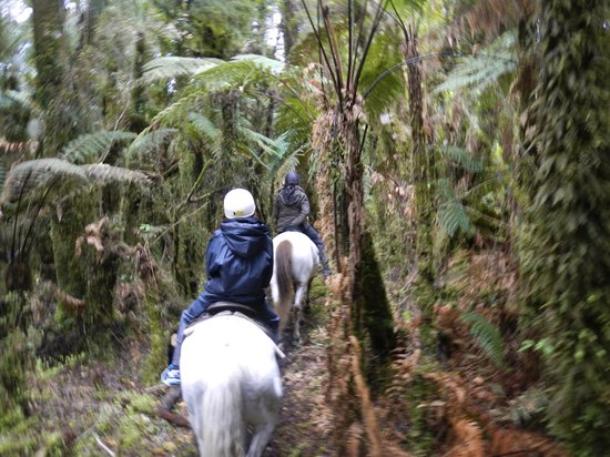 Glacier Country Horses: through the jungle