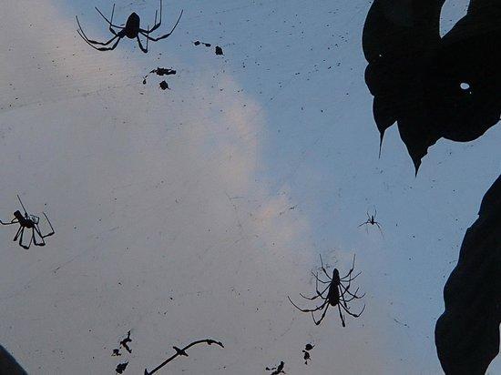 Hotel Lagunita: arañas en todos lados