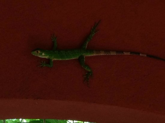 Hotel Cantarana: Friend guarding the porch