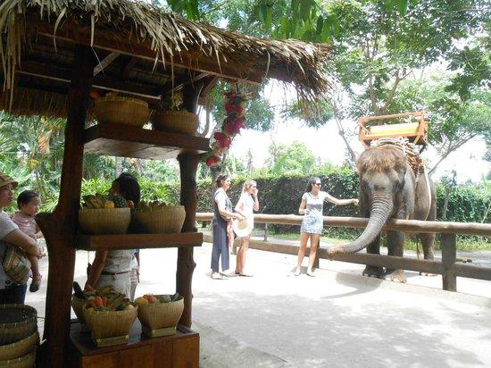 park map - Picture of Bali Zoo, Sukawati - TripAdvisor