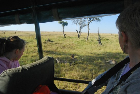 Mara Intrepids Luxury Tented Camp: Getting up close to some Cheetas