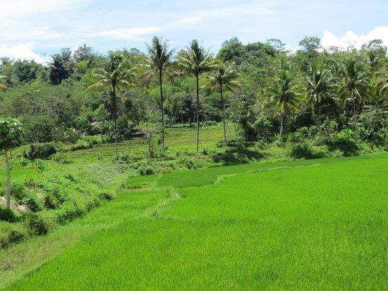 toraja village pemandangan alam
