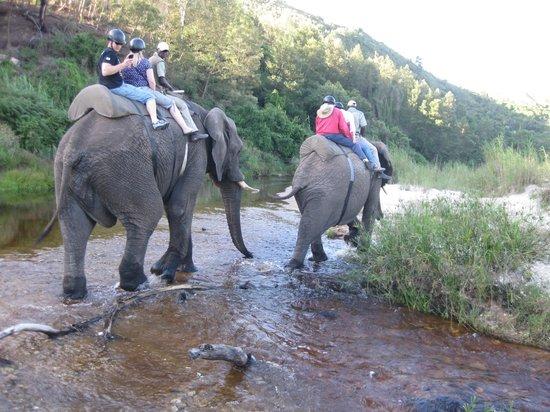 Malvern Manor Country Guest House: local elephant back safari