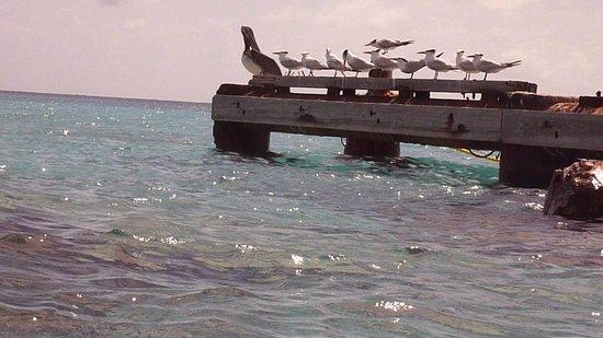 Lions Dive & Beach Resort Curacao: Klein Curacao