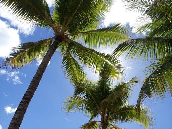 Sheraton Waikiki: プライベートプール