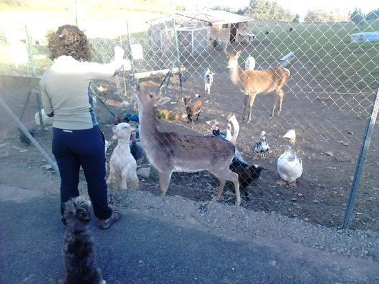 Agroturismo Indate Berri: Mini-zoo