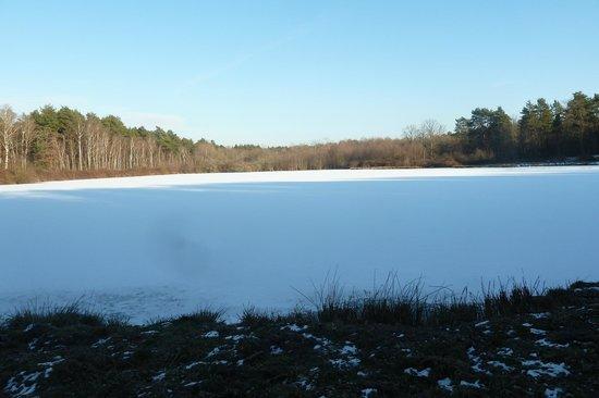 L'Oree du Bois: lors d'une ballade hivernale au bord d'un étang gelé