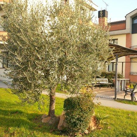 Ristorante Hotel Da Vito : Garden