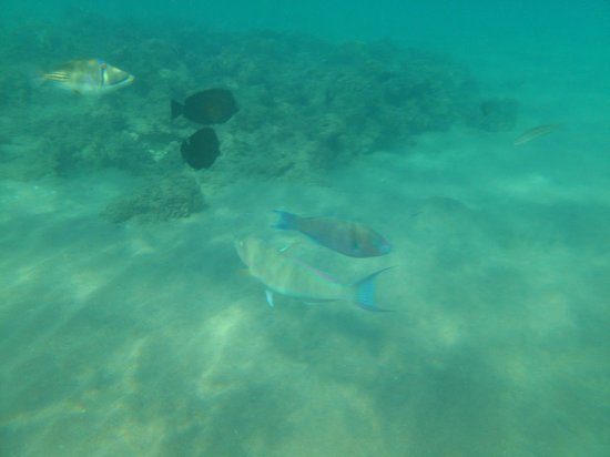 Hilton Sharm Dreams Resort : Подводный мир прямо на пляже отеля!
