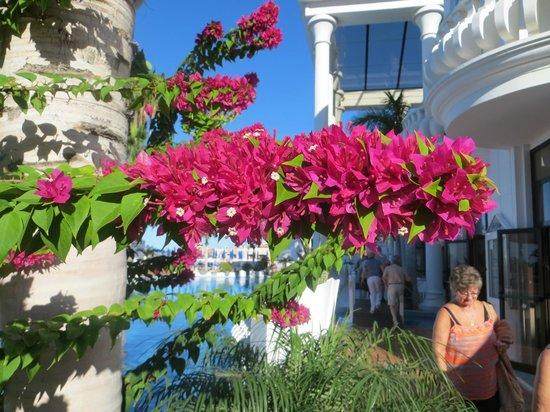 Guayarmina Princess Hotel: mooie bloemen pracht bij het zwembad