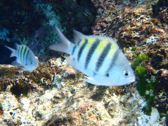 Hotel B Cozumel: great snorkeling