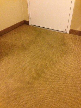 Quality Inn Encinitas Near Legoland: dirty/stained carpets
