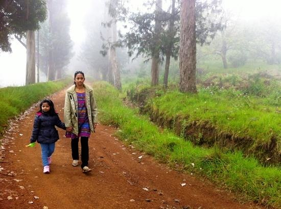 Surya Holidays Kodaikanal : the way in
