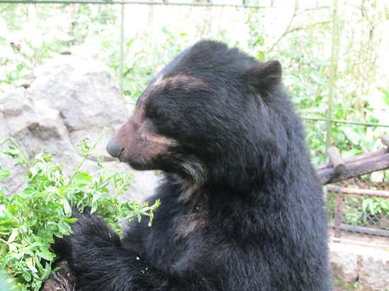 Inkaterra Machu Picchu Pueblo Hotel : See their rescued bears (not the most exciting activity)