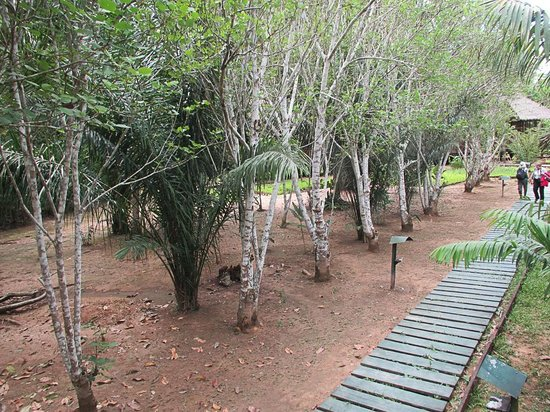 Heath River Wildlife Center: View from our room