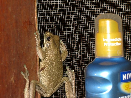 Heath River Wildlife Center: Not all the wildlife stays outside