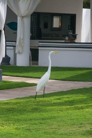 Las Terrazas Resort : Bird near the lobby
