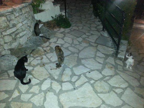 Sunshine Corfu Hotel & Spa: stray cats outside