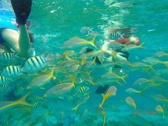 Pat & Diane Snorkeling : Lots of fish
