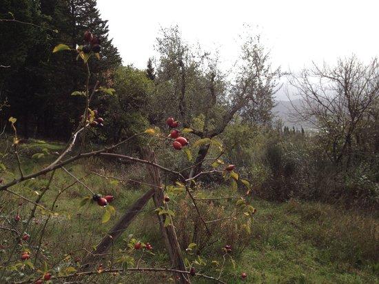Agriturismo MassoSerpente: Il bosco