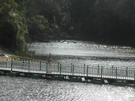Amazon Geo Jungle Lodge: Ponte