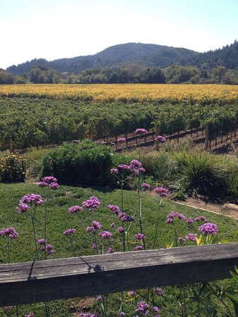 Dutcher Crossing Winery: View of the vineyards from the picnic area