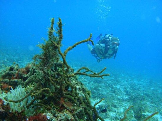 Marko's The Parrotfish Dive Center: Cozumel diving!