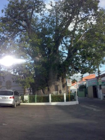 Baoba tree