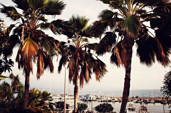 Saltimbocca: The harbor beyond the palm trees