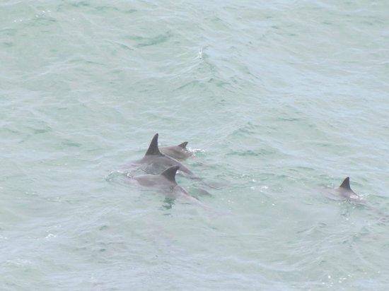 Windsor Hotel & Apartments: Delfiner foran hotellet