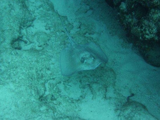 Club Med Turkoise, Turks & Caicos: hi, ray