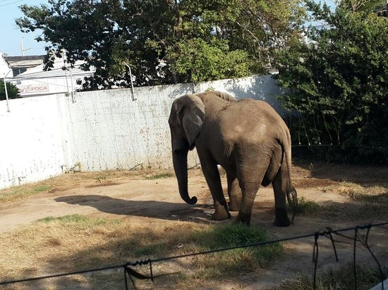 Zoo of the city of Barranquilla: El señor elefante es un excelente lugar para conocer zoo genial