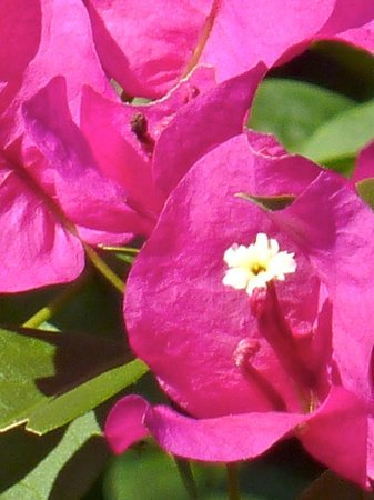 Casa Pacifica B&B: Flowers everywhere