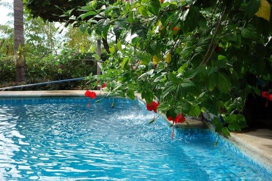 Casa Bambora: piscine