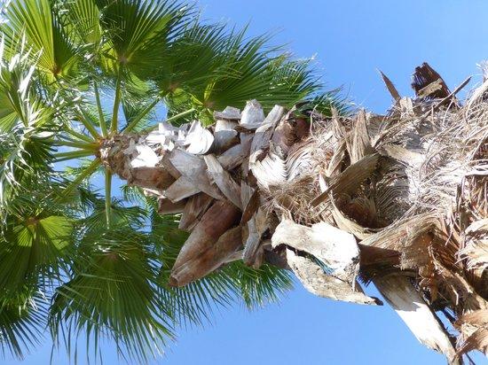 Fairfield Inn & Suites by Marriott Naples : Pretty palms!