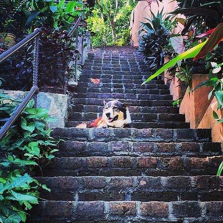 Casa La Ventana: Mia, the dogface on the second set of stairs to la Casa