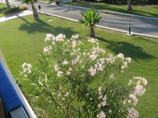 Kipriotis Maris: Room view maris